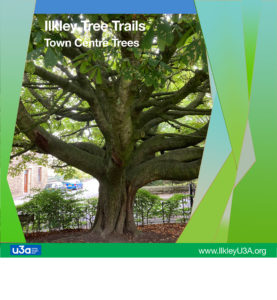 Town Centre Tree Trail